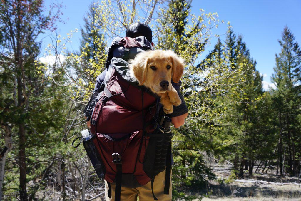 sac randonnée chien