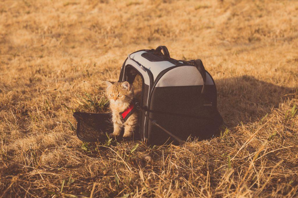 chaton sac champs
