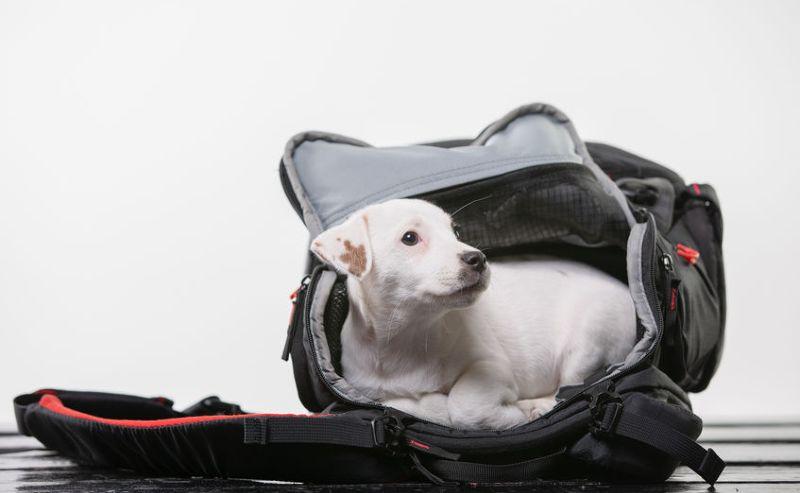 Chien dans un sac de voyage